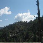 Shimla Nature