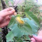 cocoon on leaf