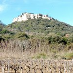 Gicon castle and wineyards