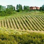 Foto de Il Pino Bioagricoltura