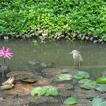 Leela Palace Bangalore Garden