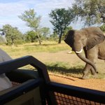 Day game drive- elephant