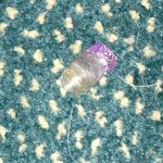 Previous guests' Finger nail occupying my room surrounded by hair on carpet - yuk!