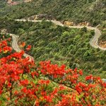 Zhangping Yongfu Flower Country