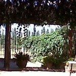Jardín interno, vista a viñedos vecinos
