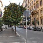 Linda rua em fruto