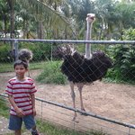 My nephew Andrei was enjoying in the Agalon Zoo. :)