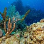 Epic Scuba Diving