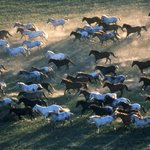 Morning Wrangle of horses