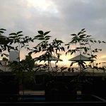 sunrise, roof deck/herb garden
