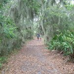 One of the beautiful areas along a Skidaway nature trail