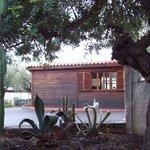 Recepción y cactus
