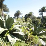 Tresco Gardens...said to be a sub-tropical paradise of plants from around the world..
