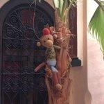 Monkey on a palm