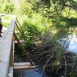 Beetle Lake Trail