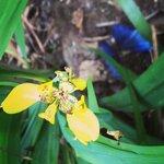 Spirogyra Butterfly Garden