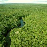 Amazonia Photo