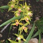 Orchidee de l'Orchidèe