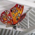 butterfly above cafe