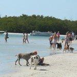 Dogs running around the beach