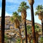 Trail of Palms Foto
