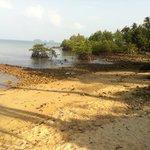 spiaggia a dx del resort; mangrovie roccie e melma