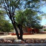 Parque Zoo-botanico da Caatinga Foto