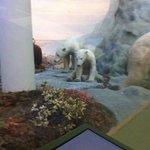 polar bears in the diorama