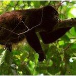 Gamboa Rainforest Resort Radio Station Tour