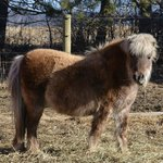 Another shaggy pony