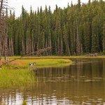 Goldeye Lake