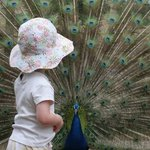 Little Girl With Our Peacock