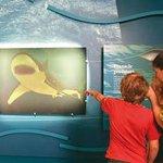 Naturaliste Marine Discovery Centre