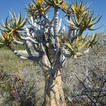 National Botanic Garden of Namibia Photo