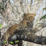 Leopard we saw in Nagarhole National Park