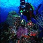 Patti's Reef Foto