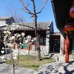 Morning view of main courtyard with spring blossoms