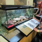 Snakes: reptile area, 2nd floor
