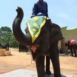 Elephant ride at Resort centre...