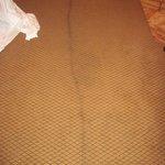 Filthy carpeting