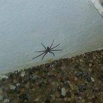 Tarantula in onze badkamer