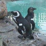 Foto de Sanccob Western Cape - Penguin Rehabilitation Center