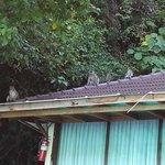scimmiette sul tetto