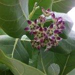 flowering shrub