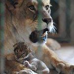 Shenyang Zoo