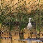 Foto de Azraq Wetland Reserve