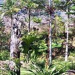 Burrendong Arboretum