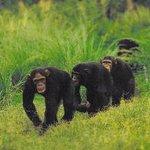Natur- og dyrelivsrundture