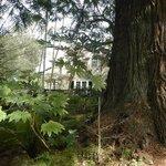 Inn thru woods
