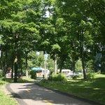 Grand arbres mature sur presque tout le Camping